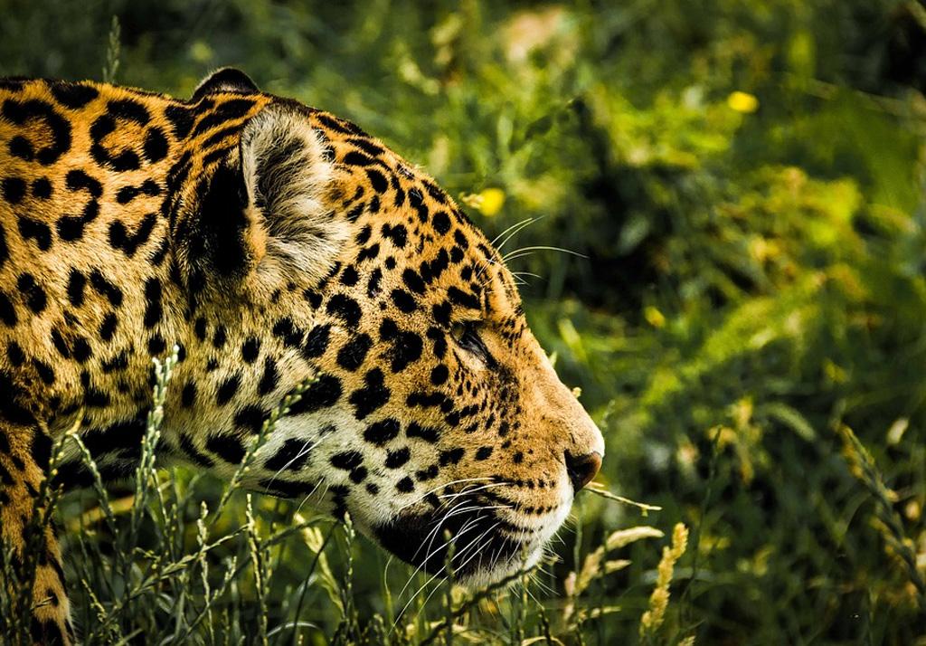 Carte Cezam Kingoland.Parc Des Felins Guide Pratique Et Tarifs 2019