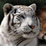 Zoo Tooroparc