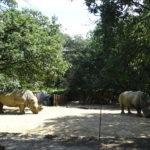 Zoo African Safari Plaisance du Touch